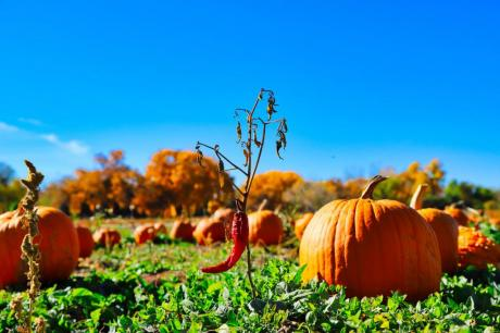 Fall in NM. (c) Trey Flynt